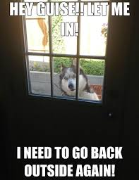 Funny Husky Memes - best husky memes of all time