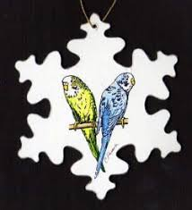 61 best budgies images on budgies parakeets and