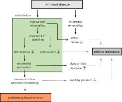 the pathophysiology of pulmonary hypertension in left heart