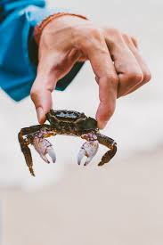 517 best crab images on pinterest crabs lobsters and ocean life
