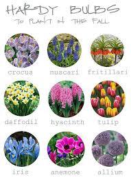 best 25 bulb flowers ideas only on pinterest spring flowering