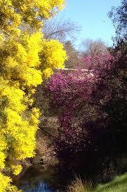 redbud native plant nursery 98 best la wildland adjacent plant palette images on pinterest