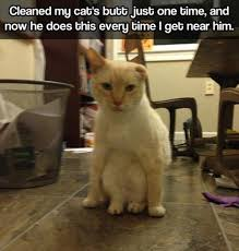 Clean Cat Memes - lolcats clean lol at funny cat memes funny cat pictures with