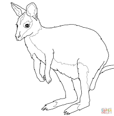 wallaby coloring pages free coloring pages