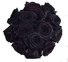 real black roses 24 stems 2 dozen farm fresh black tinted roses