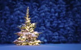 blue spruce new year tree tree night lights decoration blue