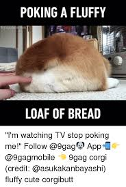 Loaf Meme - 25 best memes about loaf of bread loaf of bread memes