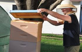 city council weighs allowing honeybee hives in st peter news