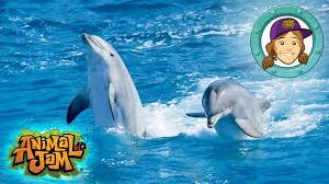 animal jam ask tierney dolphin videos