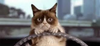 Internet Meme Cat - grumpy cat the internet meme kitty that has feline dwarfism real