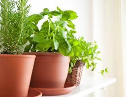indoor herb gardens