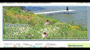 native plants ontario how to restore your shore with native plants youtube