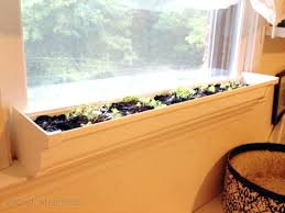 indoor windowsill planter palm in windowsill planter palm windowsill windowsill planter indoor