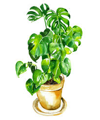 5 chic houseplants and how to keep them alive vogue