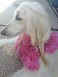afghan hound hairstyles and we thought an afghan hound couldn u0027t get more fabulous