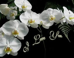 i love you greeting white moth orchids photograph by mother nature