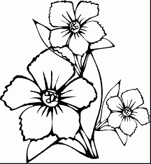 excellent indian jasmine flower coloring pages with flowers
