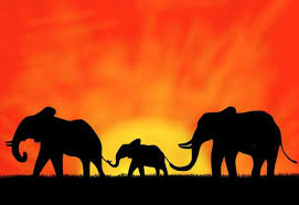 beautiful elephant family child sunset