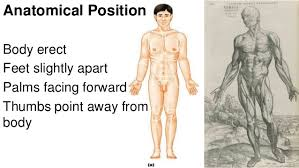 Directional Terms Human Anatomy Anatomy And Physiology Introduction To The Human Body