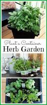 10 Vegetables U0026 Herbs You by 10 Best Growing Herbs Images On Pinterest Gardening At Home And
