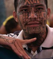 woman unwittingly fed sheltered ms 13 gang member