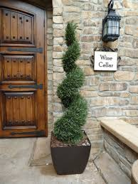 home decoration stunning front door spiral topiary plants