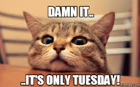 Happy Tuesday Meme - tuesday memes 43 wishmeme