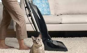 How Long Do Fleas Live In Carpet How To Get Rid Of Fleas In Carpet Without Any Harse Chemicals