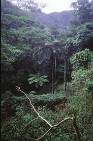 native plants in tropical rainforest humid forest plants plants of new caledonia