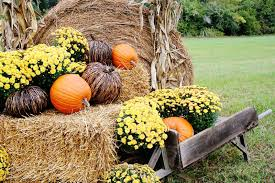 fall decorations for outside fall decorating ideas for outside and a story