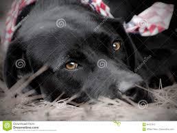 Mobilandia Stock by Labrador Americano Labrador Americano With Labrador Americano