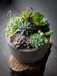 this site has some gorgeously creative ideas for indoor succulents