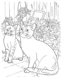 tabby cat coloring pages 500 best just cats coloring 1 images on pinterest colouring