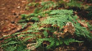 Free Picture Leaf Nature Fern Free Picture Leaf Forest Tree Foliage Garden Flora Summer