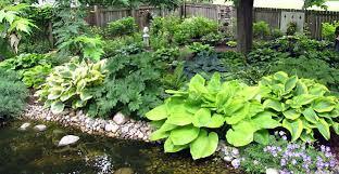 Shady Backyard Landscaping Ideas Shade Garden Plans Smart Design Tips And Ideas For A Shaded Garden