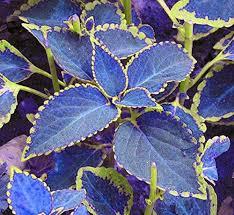 best 25 shade garden ideas on pinterest shade plants shade