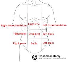 Abdominal Anatomy Quiz Tag Abdomen Anatomy Quiz Archives Human Anatomy Charts