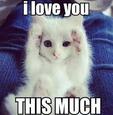 Cute I Love You Meme - love memes funny i love you memes for her and him small kittens