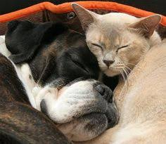 boxer dog in boxing gloves boxer dog billy you u0027ll be in my heart s2 pinterest dogs