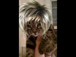 Tina Turner Halloween Costume Halloween Cat Costumes Maggie Tina Turner Submitted