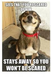 Funny Puppy Memes - 45 funny dog memes dogtime