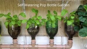 bottle garden incredible self watering pop grow system youtube