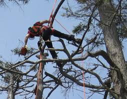 loki tree service arborist contracting services in the west