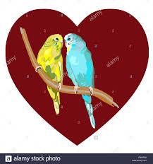 cute sun conure or sun parakeets of birds isolated on white stock
