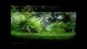 Most Beautiful Aquascapes Most Beautiful Underwater Landscapes Aquascapes Youtube