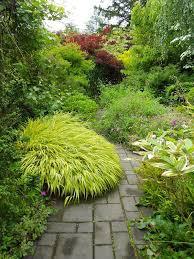 Gardening Zones Uk - beautiful japanese forest grass hakonechloa great shade