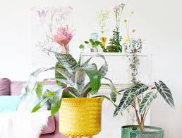 the plants at anuschka u0027s the hague u2013 green obsessions