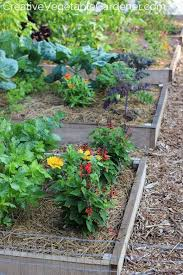 creative vegetable gardener one of the most asked garden questions