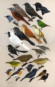 hawaiian birds to the birds of hawaii and the tropical