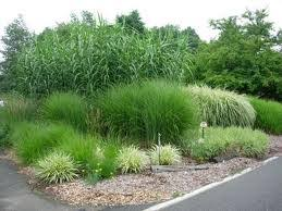 do i cut back my ornamental grass before winter custom lawn scapes